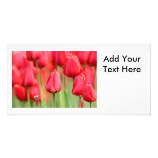 Red Tulips Photo Customised Photo Card