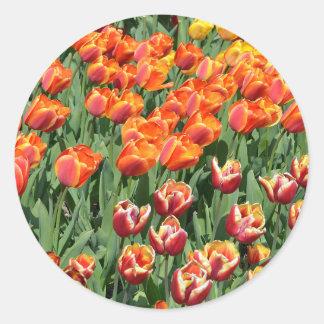Red tulips round sticker