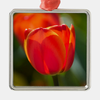 Red Tulips Silver-Colored Square Decoration