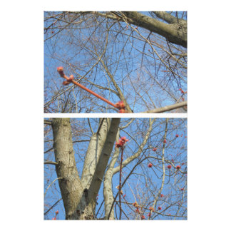 Red twigs photo