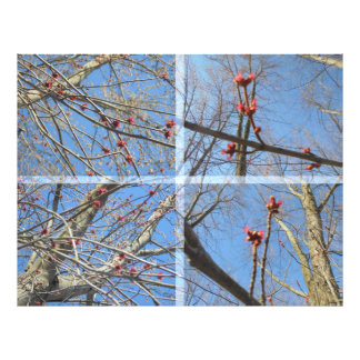 Red twigs photographic print