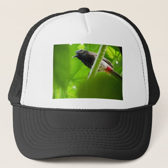 Red-vented Bulbul (Pycnonotus cafer) Cap