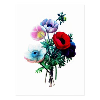 Red White And Blue Anemones by Redoute Post Card