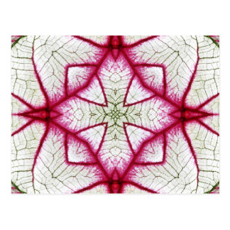 Red, White and Green Caladium Kaleidoscope Postcard