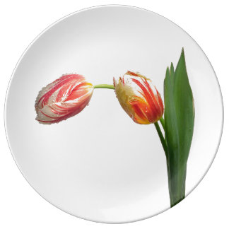 Red & White Striped Tulip on White Porcelain Plates