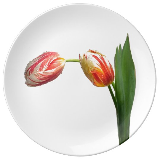 Red & White Striped Tulip on White Porcelain