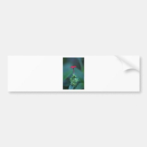 Red wildflower bumper stickers