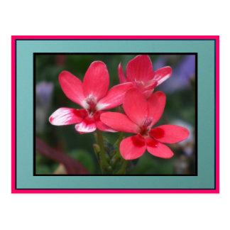 Red WildFlowers Postcard