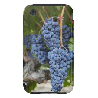 Red wine grapes on the vine iPhone 3 tough cover