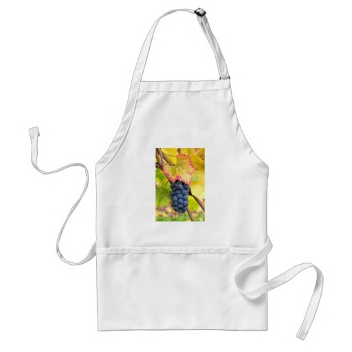 Red Wine Grapes on Vine with Fall Season Foliage Aprons