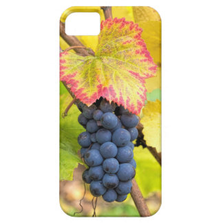 Red Wine Grapes on Vine with Fall Season Foliage Barely There iPhone 5 Case