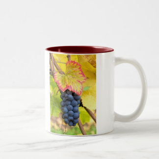 Red Wine Grapes on Vine with Fall Season Foliage Two-Tone Coffee Mug