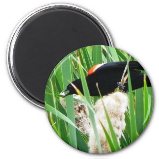 Red Winged Black Bird 6 Cm Round Magnet