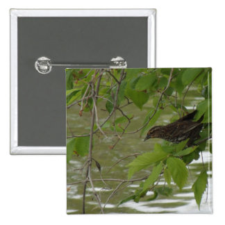 red winged black bird Fishing from a tree branch 15 Cm Square Badge
