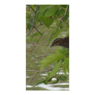red winged black bird Fishing from a tree branch Custom Photo Card
