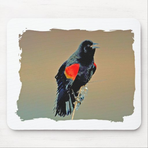 Red-winged Blackbird Art Mouse Pad