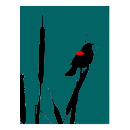 Red-winged Blackbird &Cat-tails Postcard