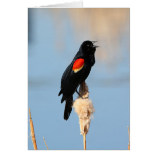 Red-winged Blackbird Greeting Cards