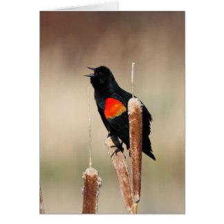 Red-winged Blackbird III Greeting Card