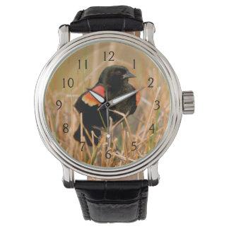 Red-winged Blackbird male singing Watch