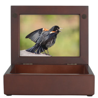 Red Winged Blackbird Singing Keepsake Boxes