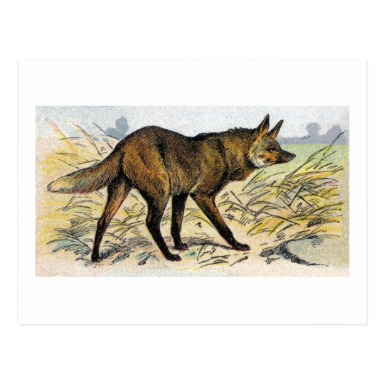 Red Wolf Postcard