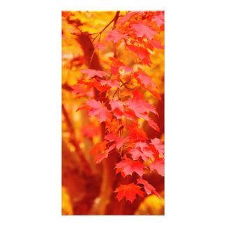 RED YELLOW AUTUMN LEAVES FALL MAPLE NATURE BEAUTY CARD