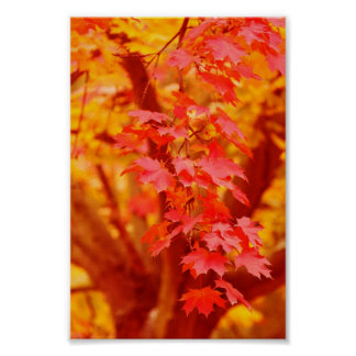 RED YELLOW AUTUMN LEAVES FALL MAPLE NATURE BEAUTY PRINT