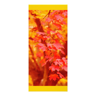 RED YELLOW AUTUMN LEAVES FALL MAPLE NATURE BEAUTY PERSONALIZED RACK CARD