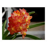 red yellow orchid print