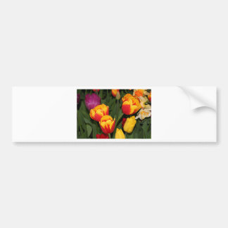 Red yellow Tulip flowers in bloom 6 Bumper Stickers