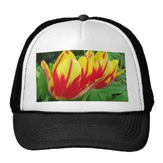 red yellow tulips trucker hats