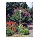 Red Yildiz Park, Istanbul flowers Postcard
