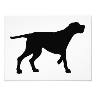 redbone coonhound photo