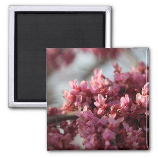 Redbud Flower Magnet