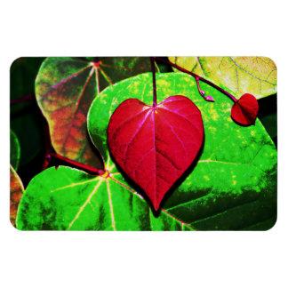 Redbud Heart Leaf Flexible Magnets