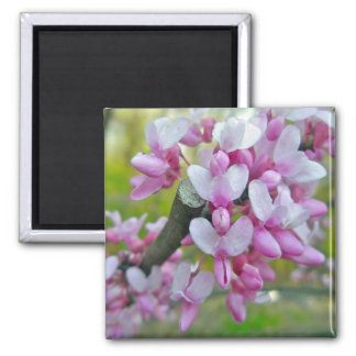 Redbud Tree Blossoms Items Square Magnet