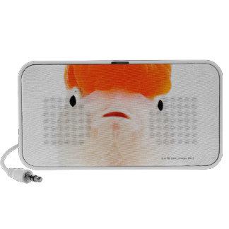 Redcap lionhead goldfish (Carassius auratus) Laptop Speakers