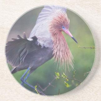 Reddish Egret (Egretta Rufescens) Adult Coaster
