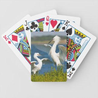 Reddish Egret (Egretta Rufescens) Adult Feeding Bicycle Playing Cards