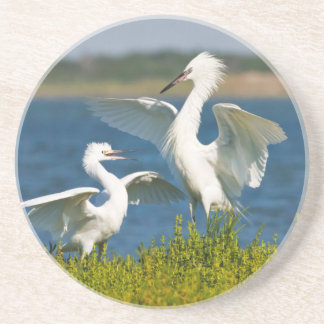 Reddish Egret (Egretta Rufescens) Adult Feeding Coaster