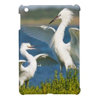 Reddish Egret (Egretta Rufescens) Adult Feeding iPad Mini Case