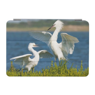 Reddish Egret (Egretta Rufescens) Adult Feeding iPad Mini Cover