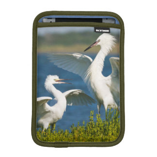 Reddish Egret (Egretta Rufescens) Adult Feeding iPad Mini Sleeve