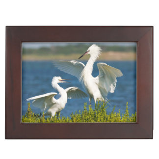 Reddish Egret (Egretta Rufescens) Adult Feeding Keepsake Boxes