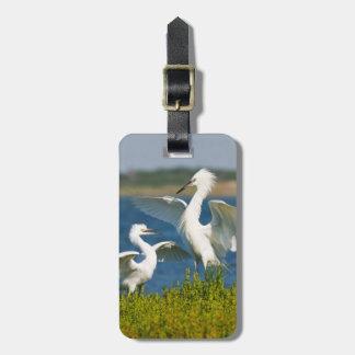 Reddish Egret (Egretta Rufescens) Adult Feeding Luggage Tag