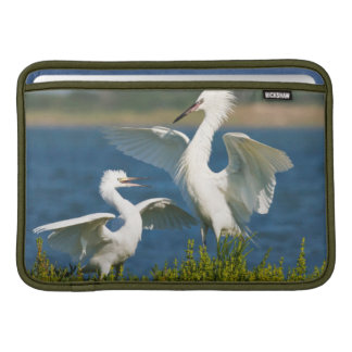 Reddish Egret (Egretta Rufescens) Adult Feeding Sleeve For MacBook Air