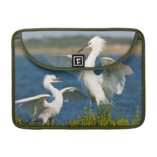 Reddish Egret (Egretta Rufescens) Adult Feeding Sleeve For MacBooks