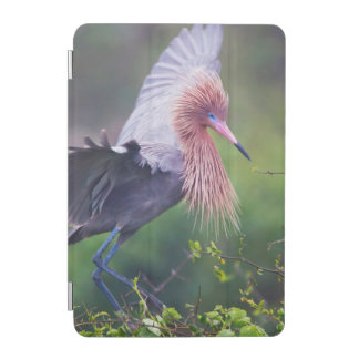 Reddish Egret (Egretta Rufescens) Adult iPad Mini Cover