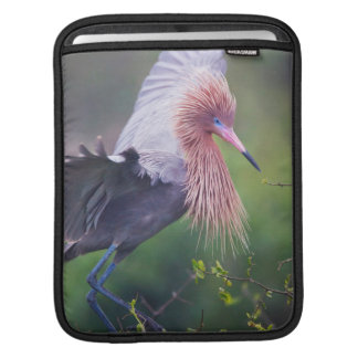 Reddish Egret (Egretta Rufescens) Adult iPad Sleeve
